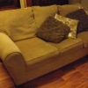 Pale Olive and Gold Couch